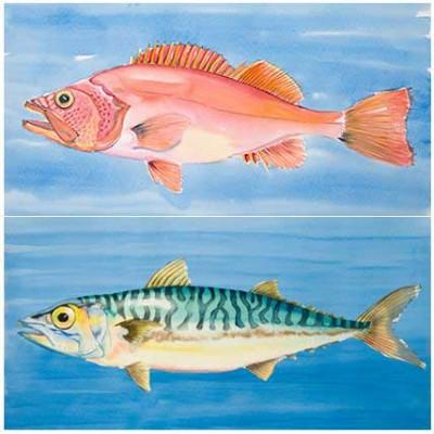 Fische - Aquarelle auf Papier